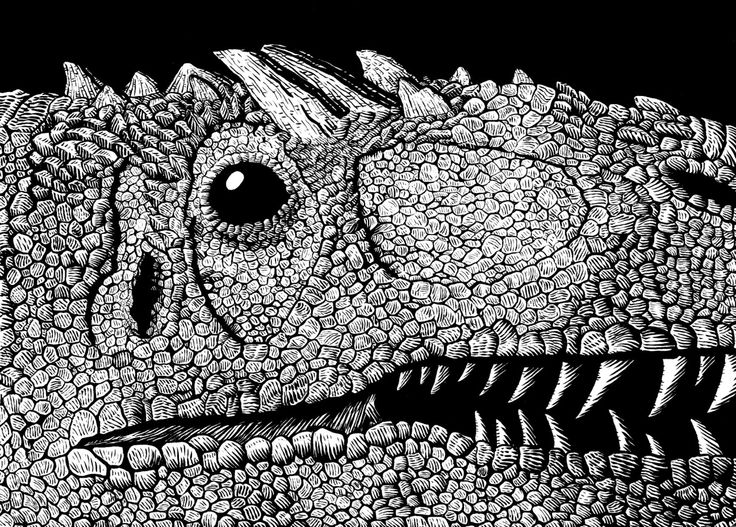 Pen and Ink drawing of an Allosaurus head.