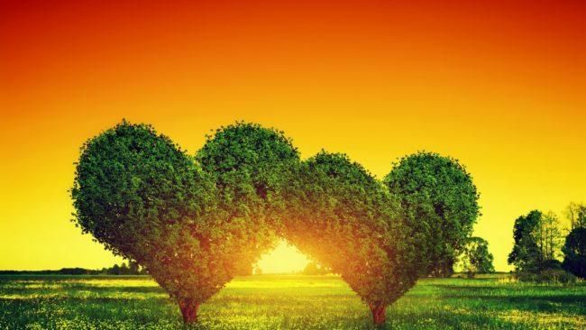 Strelec Goroskop Na 2021 God Byka Tochnyj Prognoz Love Images Flower Field Image