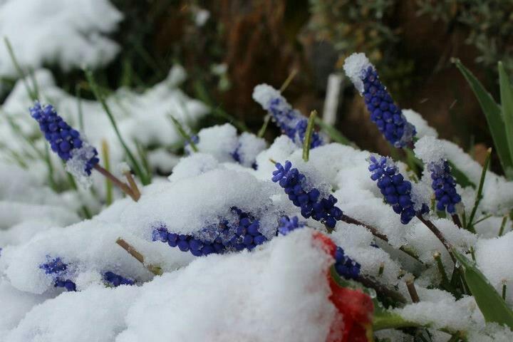 Spring snow, Thredbo.