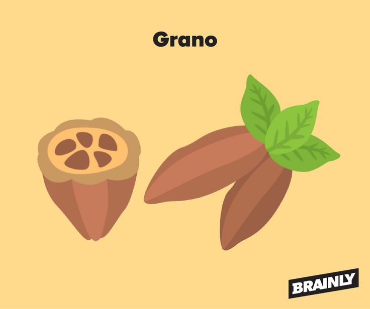 Grano de cacao, chocolate.