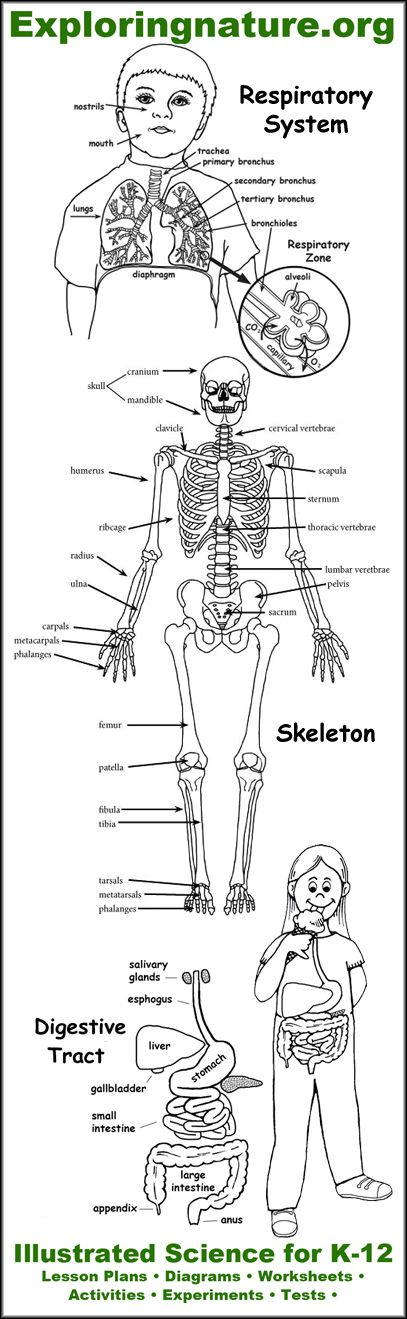 Human anatomy resources