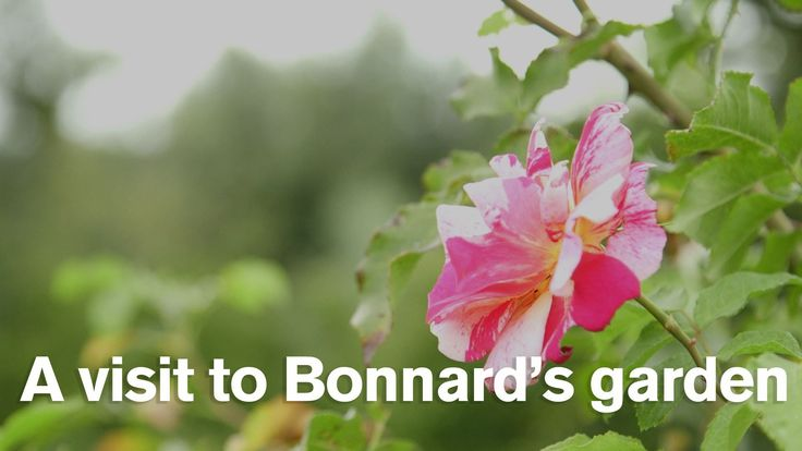 A visit to Pierre Bonnard's garden at Vernonnet