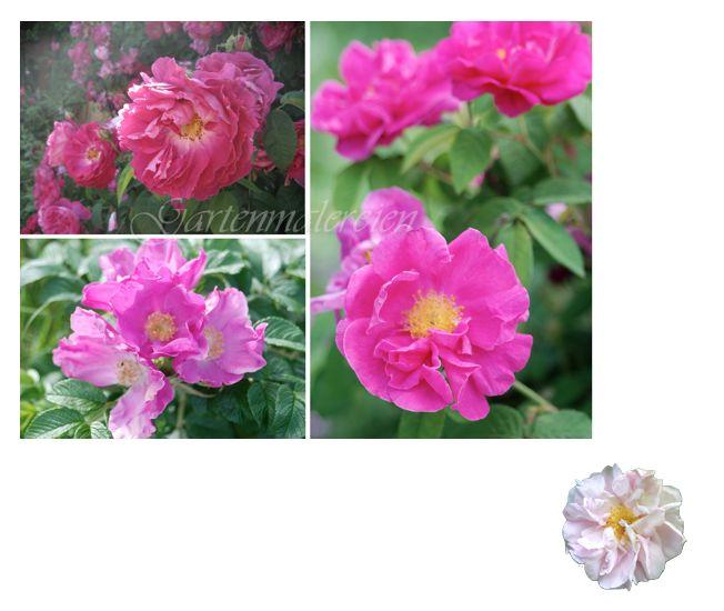 Malkurs mit Heinz Hofer, Rosen malen Heinz Hofer, Rosen aquarellieren, Aquarell Rosen, Watercolors Roses,