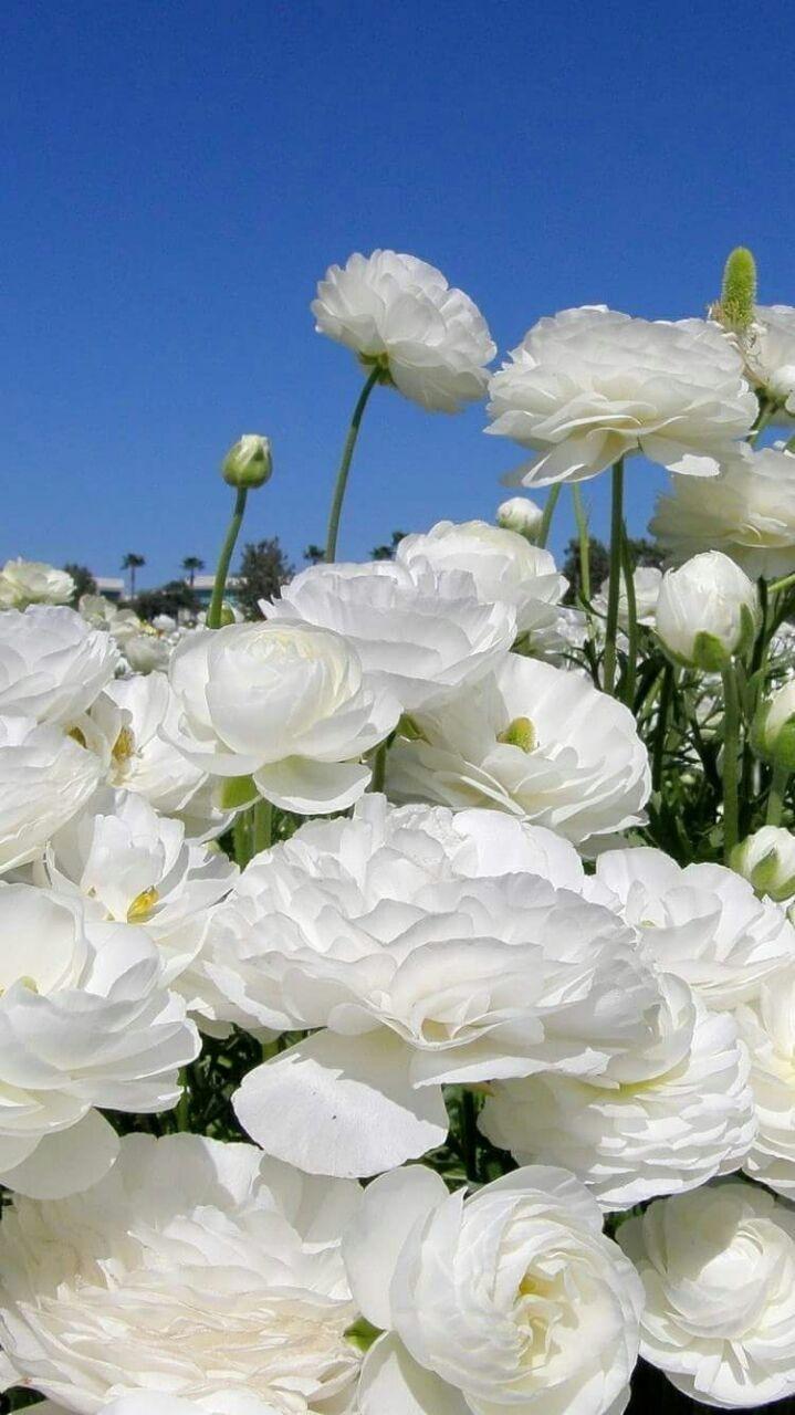 304 Best Florattas Images On Pinterest Flower Pictures Art