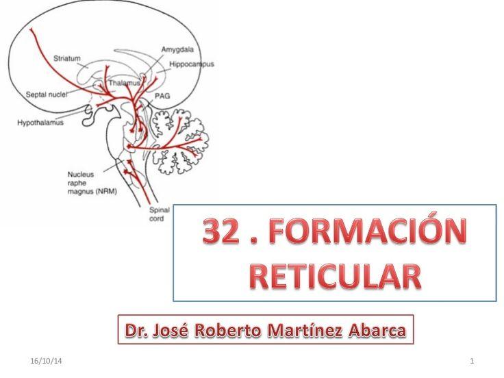 Resultado de imagen de nucleo parabraquial