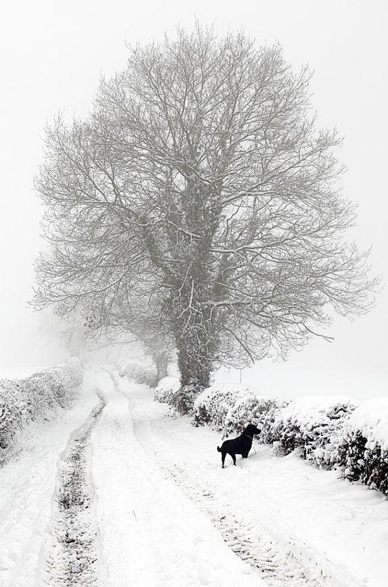 Winter Lane - stock photo