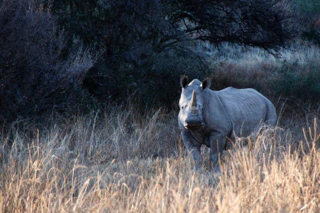 Willem Pretorius Game Reserve