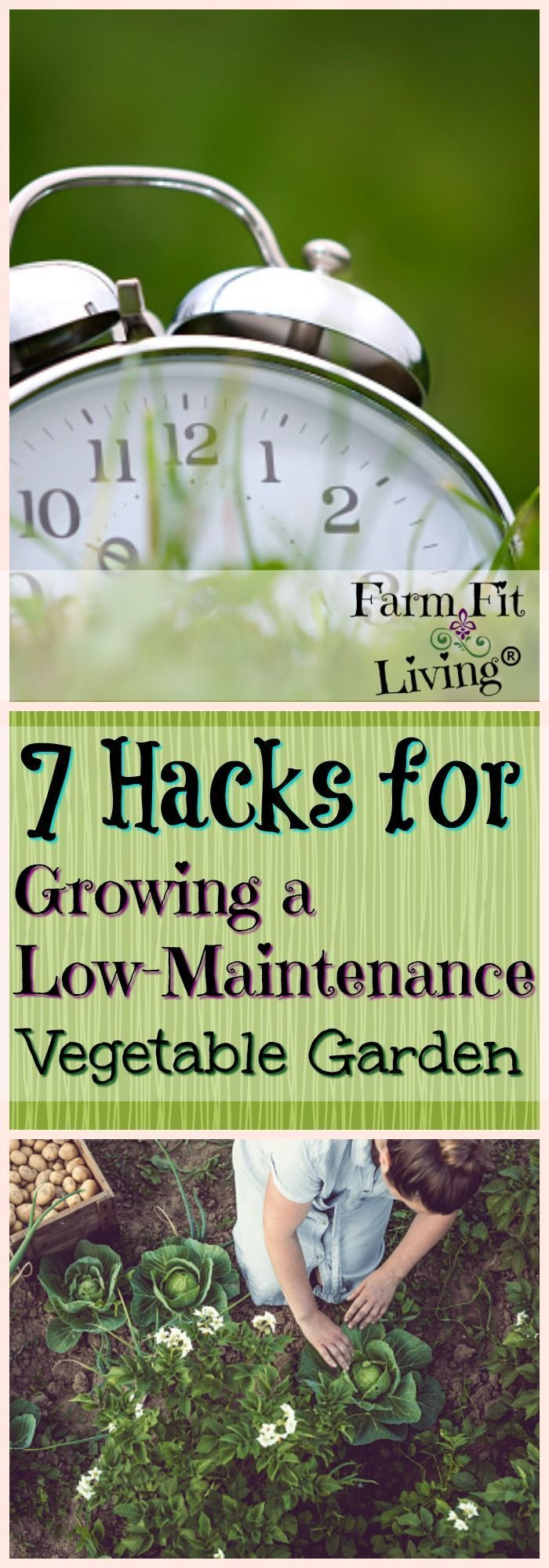 7 Hacks For Growing A Low-Maintenance Vegetable Garden