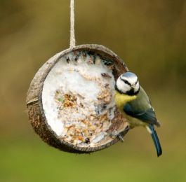 Coconut bird feeder...easy, suet, and birdseed!  Leave room on the edge for the bird to perch.