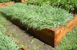 Great tips for your garden