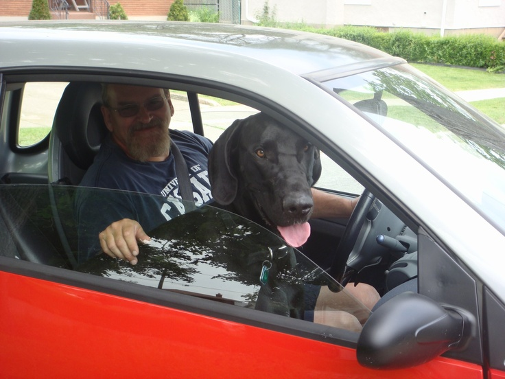 woman riding with great dane in car