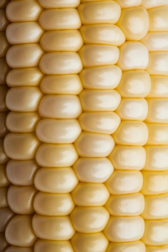 Close up of corn on the cob image for purchase on GettyImages bfghjklbvcdtyj, I like the soft buttery yellow color.