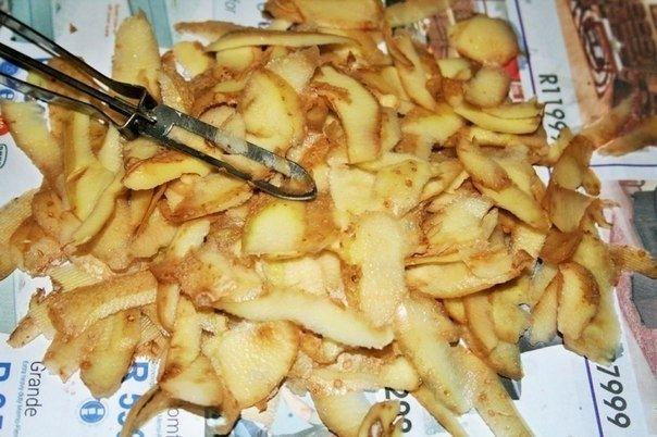 Картофельные очистки - лучшее удобрение для смородины 0
