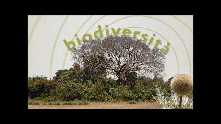 """ECOLOGIA/ parola chiave n.8: BIODIVERSITÀNegli ultimi anni la perdita di biodiversità è diventata un problema molto serio. Tra le cause principali ci sono la distruzione degli ambienti naturali da parte dell'uomo,  i cambiamenti climatici, l'eccesso di sfruttamento di specie animali e vegetali, la caccia e la pesca  indiscriminate, l'immissione di specie """"aliene"""" o geneticamente modificate (OGM).  #ecobellusco #ecologia, #ambiente #biodiversita`"""