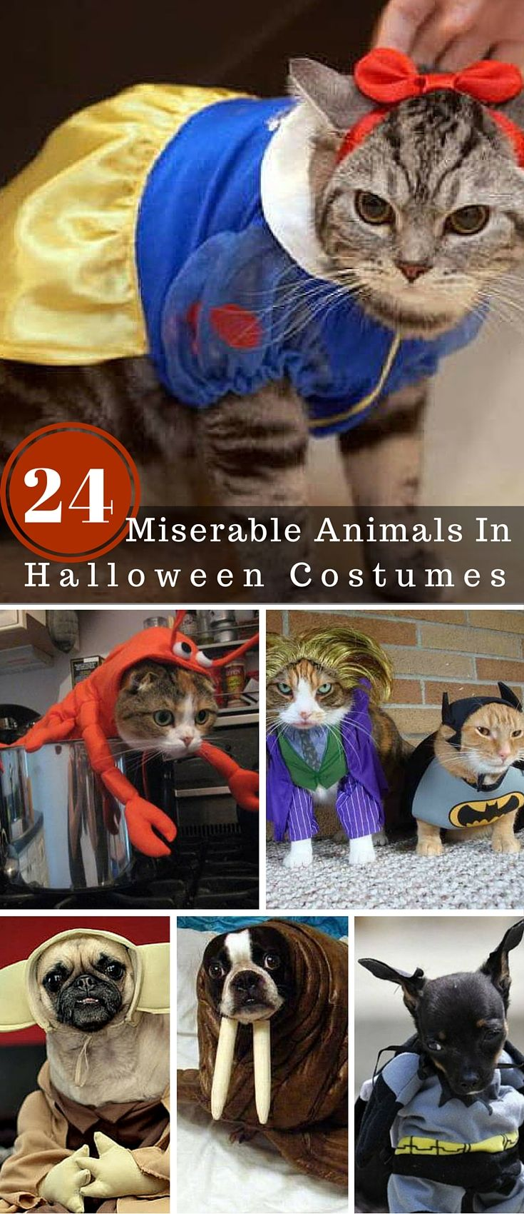 Halloween isn't fun for everybody... maybe not all pet Halloween costumes are a good idea.