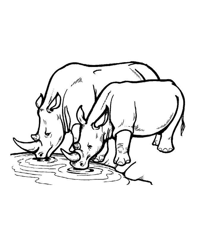 Rhinos At The Water Hole Animal Coloring Page