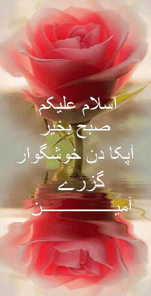 Pin on GIF Urdu