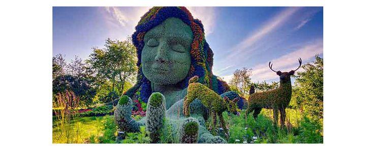 Bitki Heykellerin basın toplantısı Kanada'da yapıldı