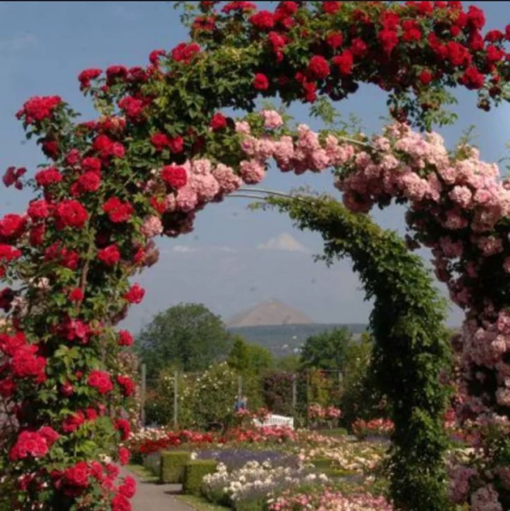 Garden Design Arches 92 best flower arches images on pinterest | landscaping, flowers