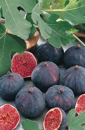 Une figue (il en existe de nombreuses variétés) --- figos