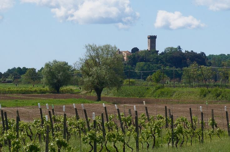 Budding vines with Brunelleschi's Medieval fortress in the background