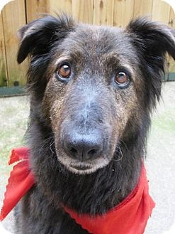 Olympia Animal Services Dogs Up For Adoption