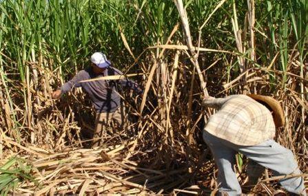 Arbeiter bei der Zuckerrohrernte, Manduvirá, Paraguay