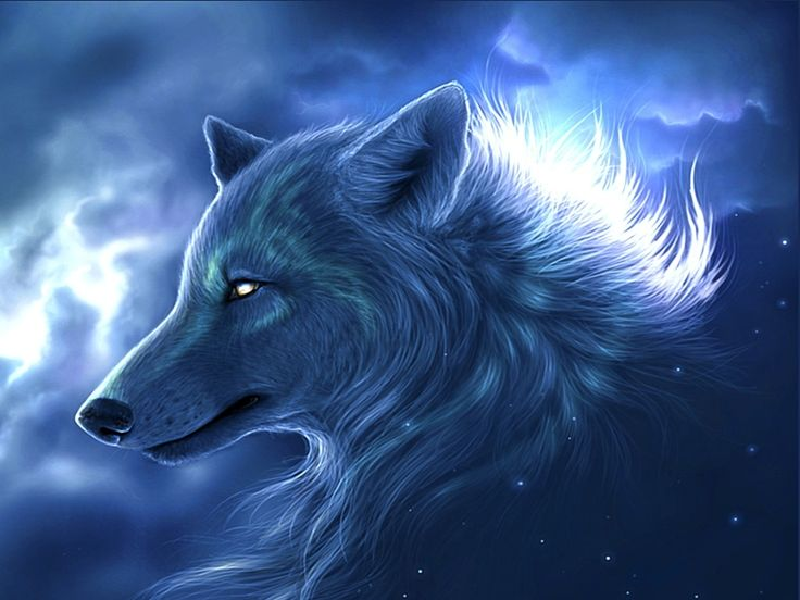 Wallpaper HD Wolf 91 , Picture, Image Or Photo