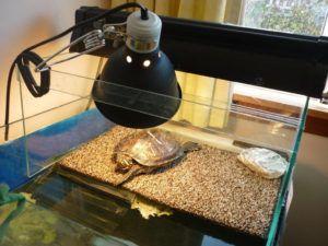 Uv Light Bulbs For Turtle Tanks