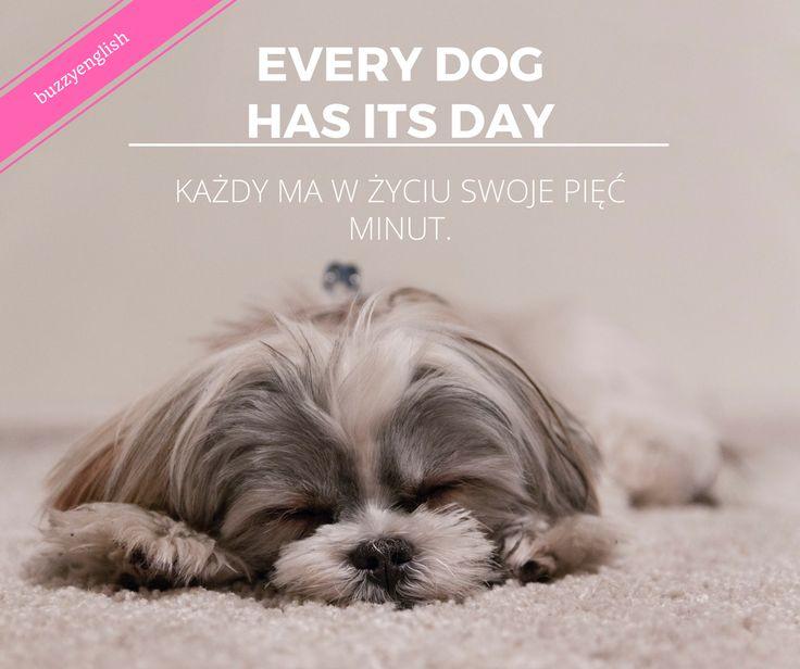 #shihtzu #dog #puppy #cute #english #esl #learn #voacabulary #angielski #nauka #buzzyenglish #Wrocław
