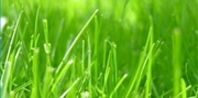 What Type of Grass Grows Well in Sandy Soil?   eHow