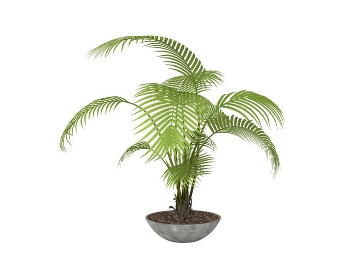 Best Houseplants Cool Shady Rooms