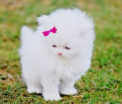 Um cutetest thing ever!: The Aristocats, Kitty Cat, Real Life, The Real, Pink Bows, Hello Kitty, Animal, Little Princesses, White Kittens