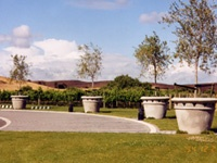 Large Mediterranean Pots at Sileni Winery  William Beattie 1200x 1200