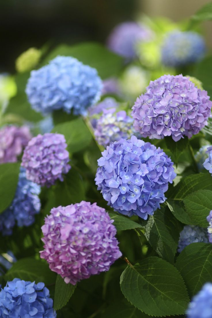 Spring #flowers