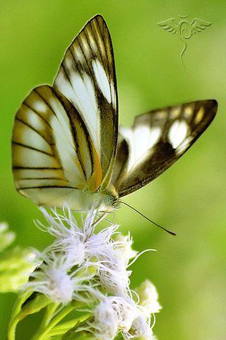 beautiful birds, butterflies and flowers – Сообщество – Google+