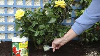 Jesenné hnojenie: Ktoré ovocie a zelenina ho potrebuje?