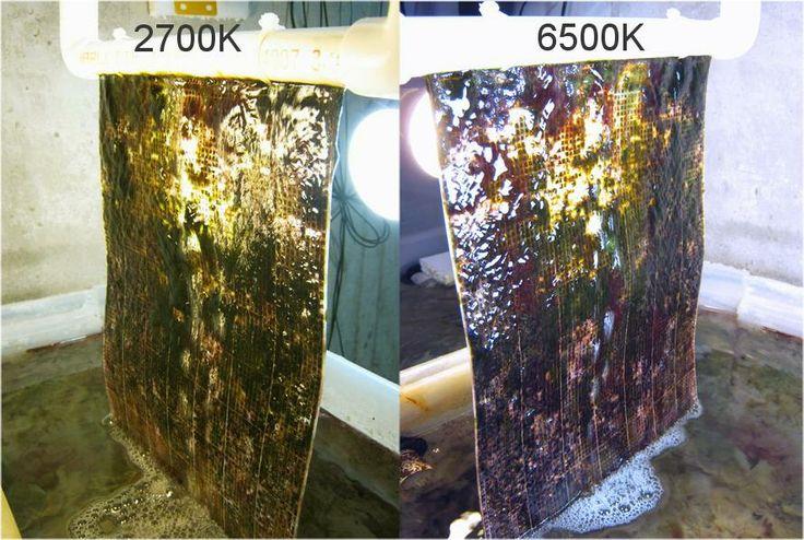 Algae Turf Scrubber Google Search Diy Algae Scrubber