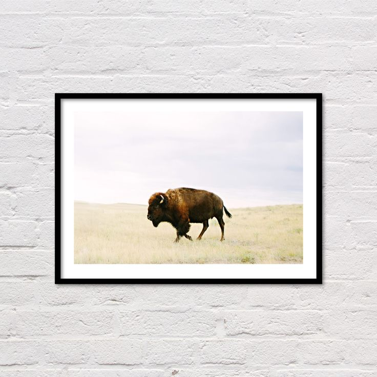 AMERICAN BUFFALO - PRINT #67 - DIGITAL DOWNLOAD  Buffalo Print, Animal Prints, Animal Art, Printable Animal Wall Art, Southwestern Prints, Buffalo Photography, Digital Art, Instant Downloads, Modern Western Art, Animals, Wyoming, Farm Prints, Farm Animals, Farm Photography   Welcome and thank you for visiting my new print shop! Here you will find a selection of my work, available for instant download. Easily print your fine art photographs or custom artwork at home, your local photo printer…