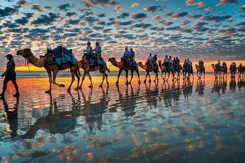 Camels at Sunset,  Cable Beach W.A by Symoto, via Flickr