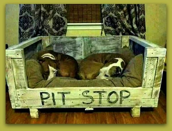 Pit Stop Raised Dog Beds For Large Dogs