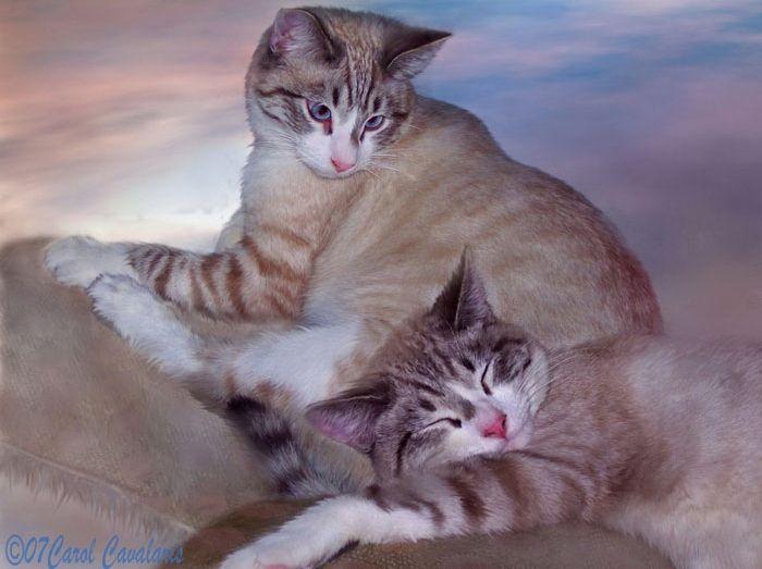 Восхитительные картины животных, или Еще одна грань таланта великолепной Кэрол Каваларис - Ярмарка Мастеров - ручная работа, handmade