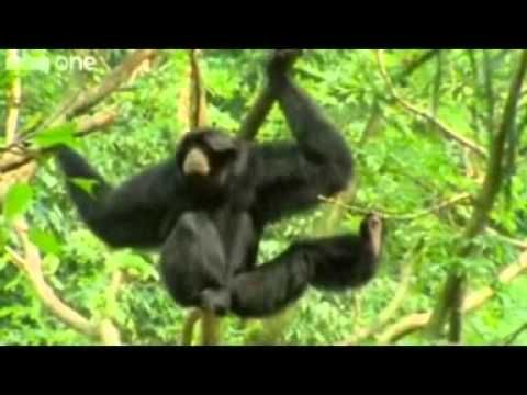 For when you need a big laugh! BEST OF Funny Talking Animals - Walk on the Wild Side  HILARIOUS :) gotta love BBC
