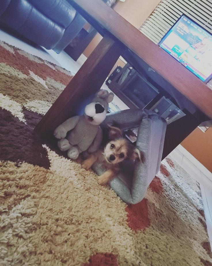 Gizmo in his little hut in 2020 Pet bed, Dogs and