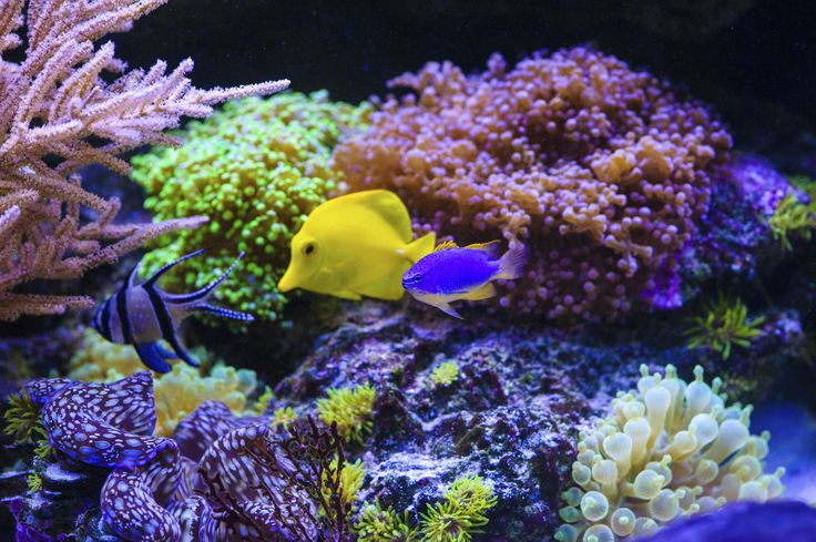 Possibly the most beautiful underwater views in the world!