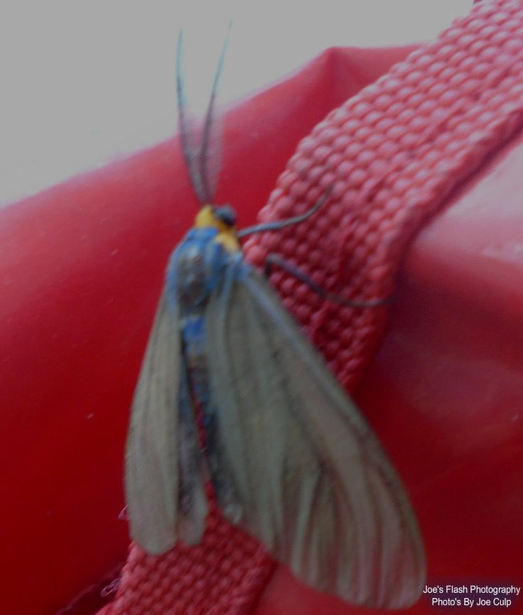 This Moth that decided to stop and take a rest on my Grocery cart