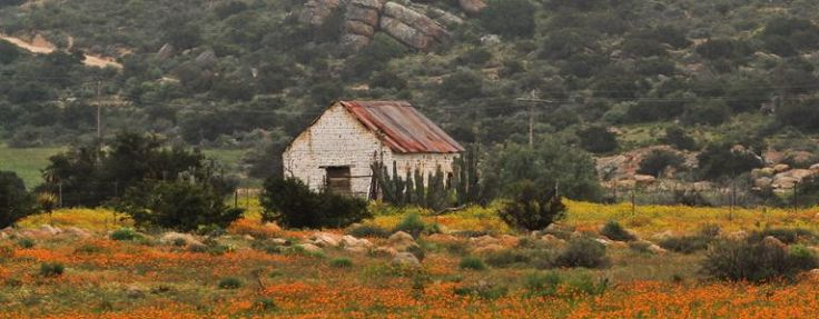 Drive from Leliefontein to Kleinzee in the Northern Cape – the 'shipwreck & daisies route' [Namaqualand]