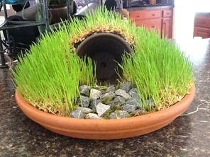 How to make a resurrection garden using wheat grass
