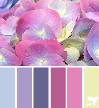 Hydrangea Hues - design-seeds.com/index.php/home/entry/hydrangea-hues2  color combination, color palettes, color scheme, color inspiration, visual communication.