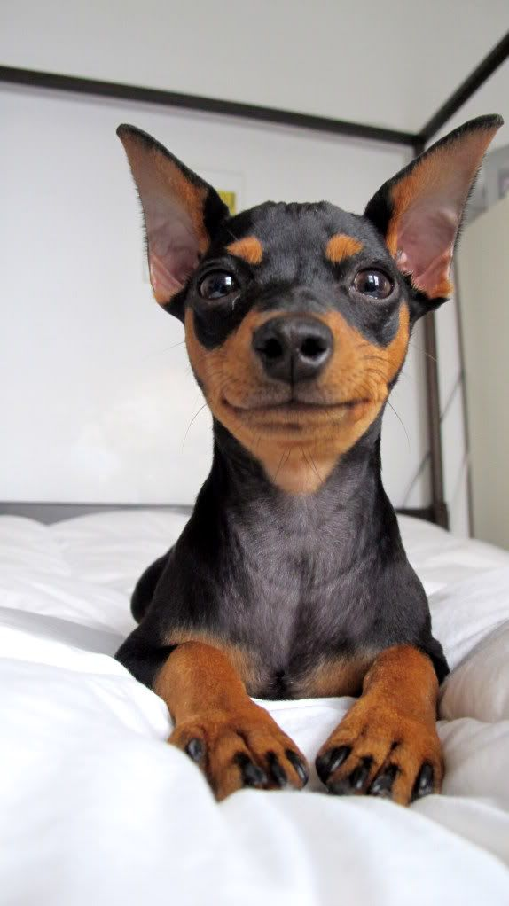 smiling min pin- I have two of these lil demons. Mojo and Jojo... yes.. after the villain from Power Puff Girls Mojojojo.